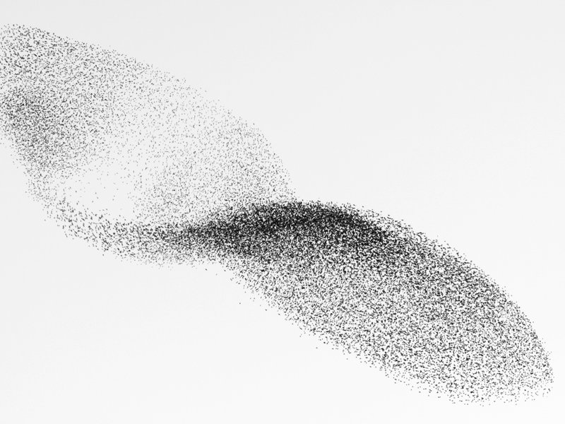 flock o birds