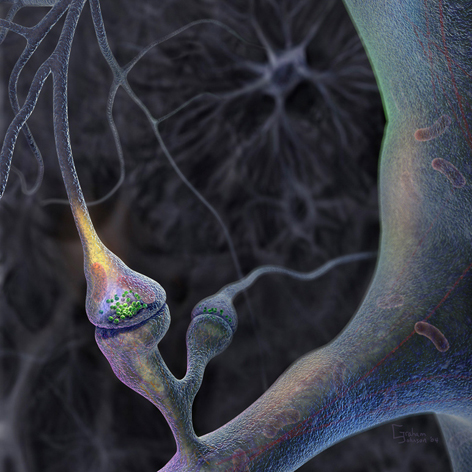 Central to the brain's web of neural circuitry the synapse is the pivotal site from which all thought and behavior is spawned.