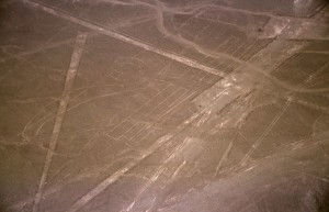 Nazca_Pelican