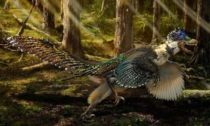 An artist's impression based on the fossils of a winged dragon found in China