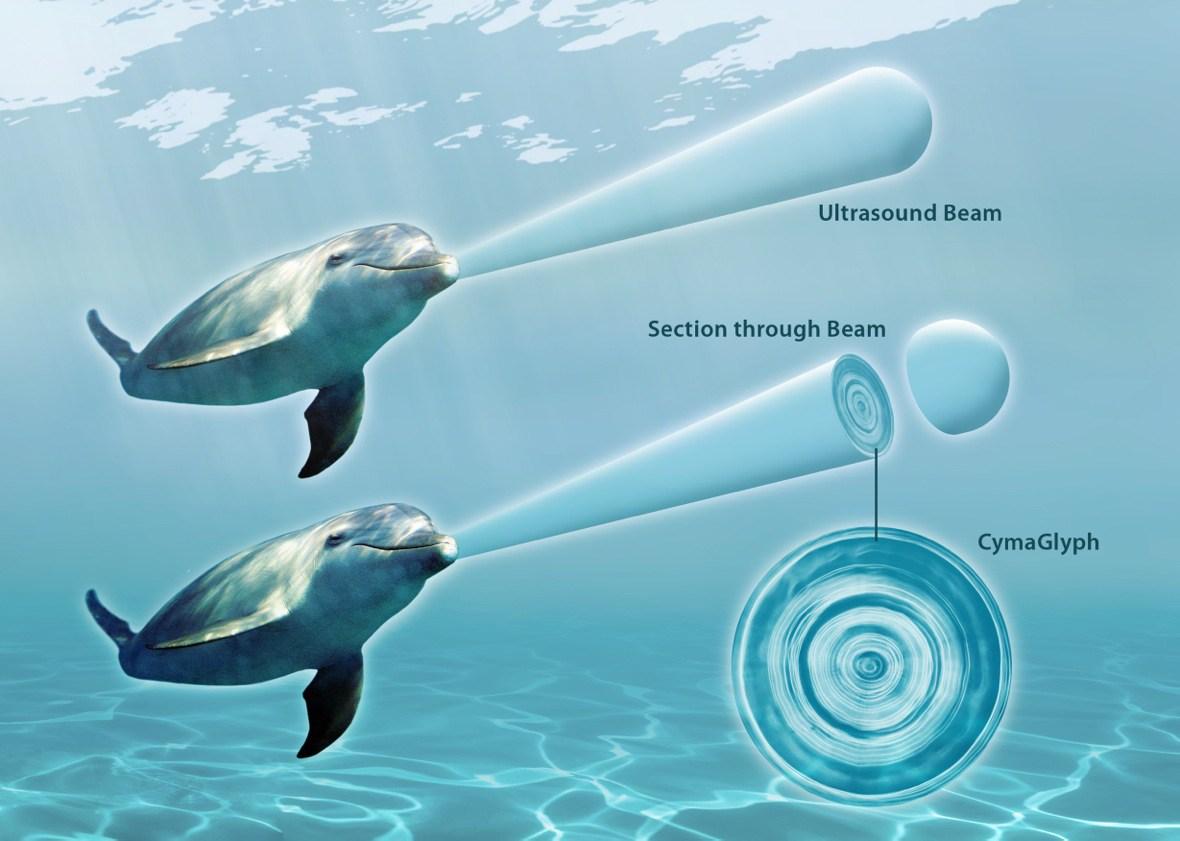 Dolphin_UltrasoundBeam_HR_A3