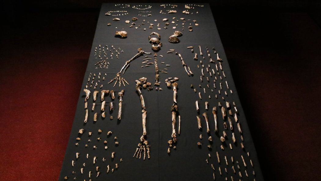 homo-naledi-skeleton