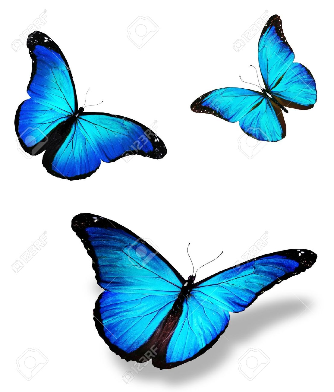 The Science Behind the Enigmatic Colors of the Butterfly ...