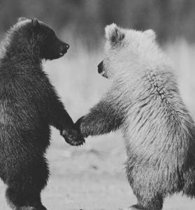 bears-e1420249797733-279x300