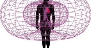 heart toroidal field