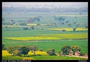 Fields in countryside. Fatehpur Sikri, Uttar Pradesh, India