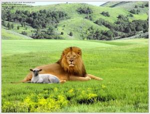 lamb and dear